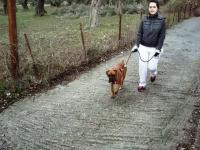 www.dog-training.gr